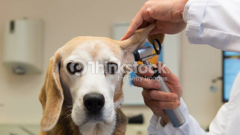 Routine vaccinations for dogs, cats and rabbits